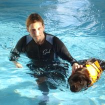Dog Swimming Treatments in Newcastle, Staffordshire