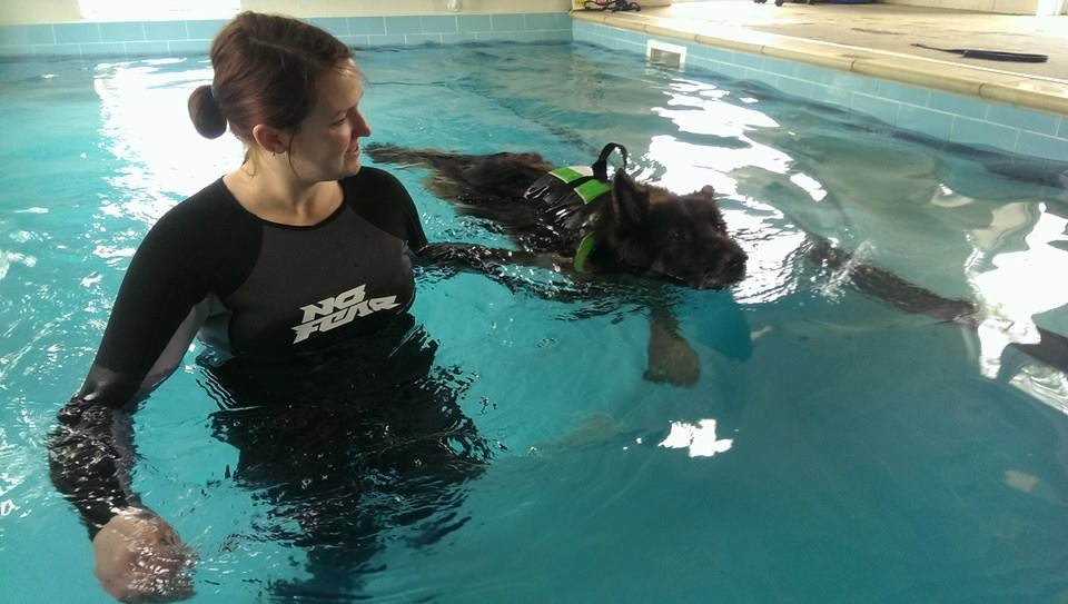 Canine Hydrotherapy Treatments in Shropshire