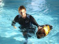 canine hydrotherapy treatment labrador
